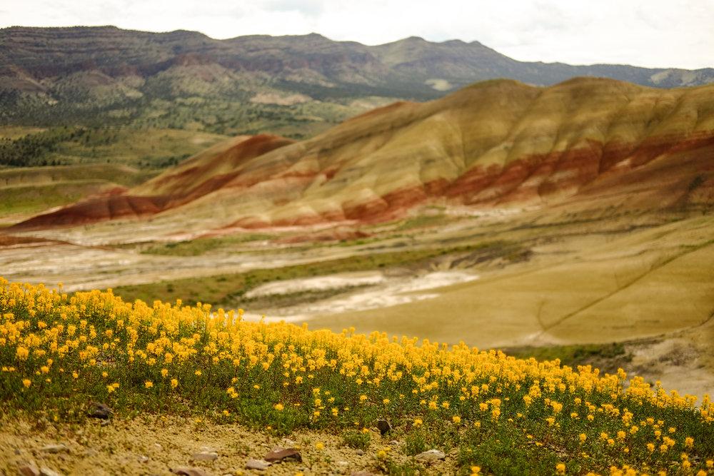painted-hills-spring-2017-5910.jpg