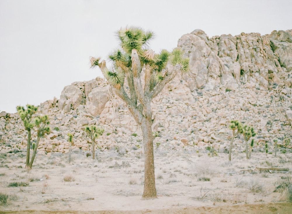 DESERT -