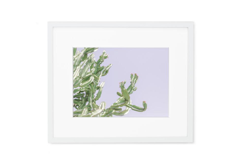 GALLERY_WHITE_cactus.jpg