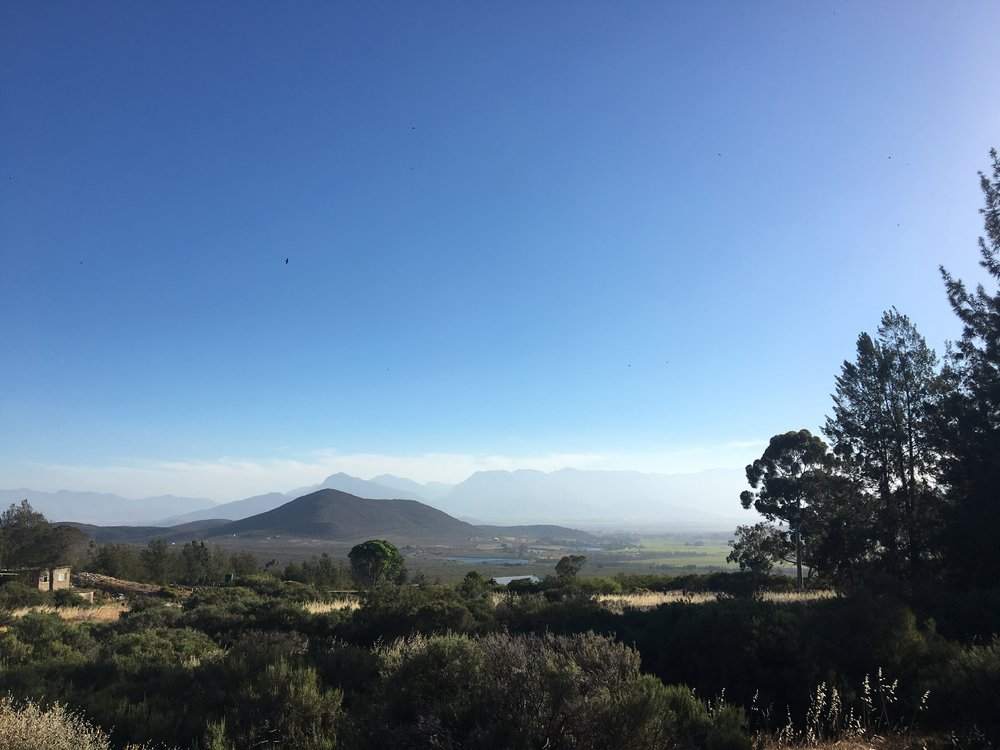 The view was impeccable. We could hear mountain lions roaring in the early mornings and colorful birds were circling the property all day.