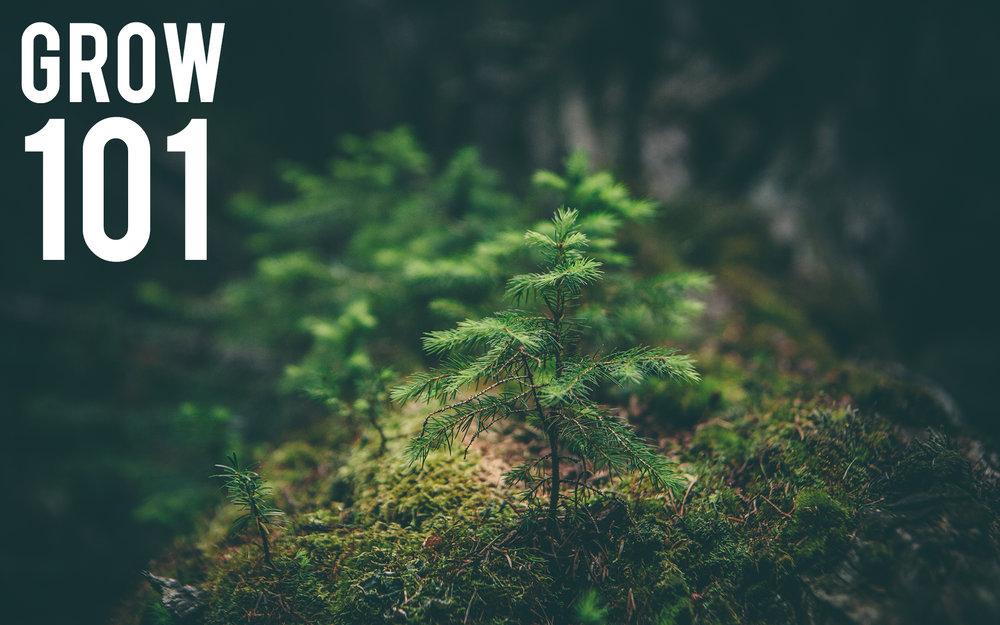 grow-logo-101.jpg
