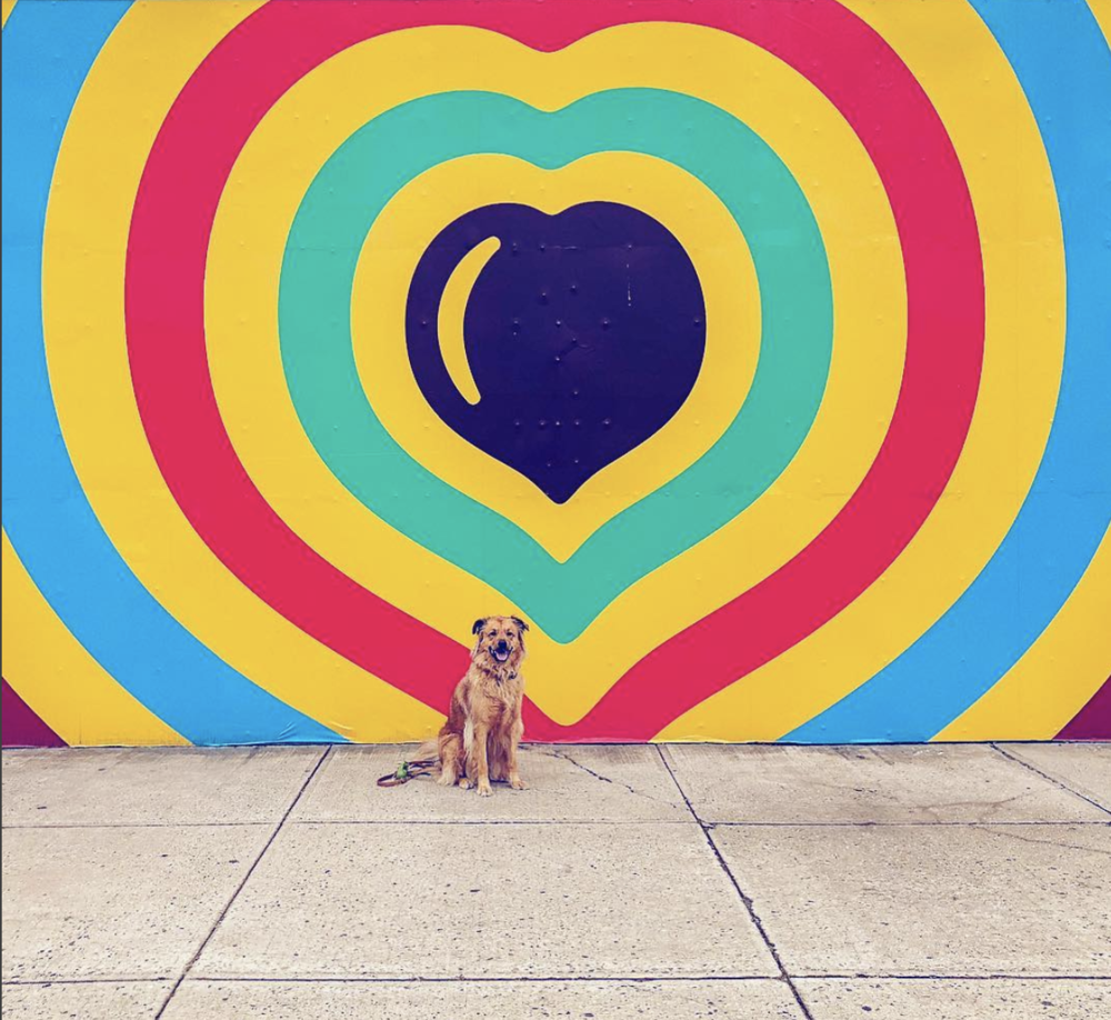 Street Art  | The streets of Brooklyn are vibrant and ever-changing, I love capturing the latest murals with Rocksy