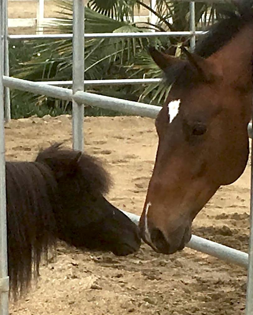edward_kissing_horse.jpg
