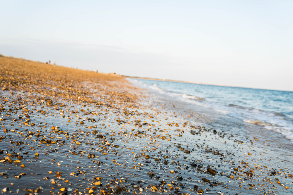 Sue-Riggs---Eastney-Beach-and-Yomper-3.png