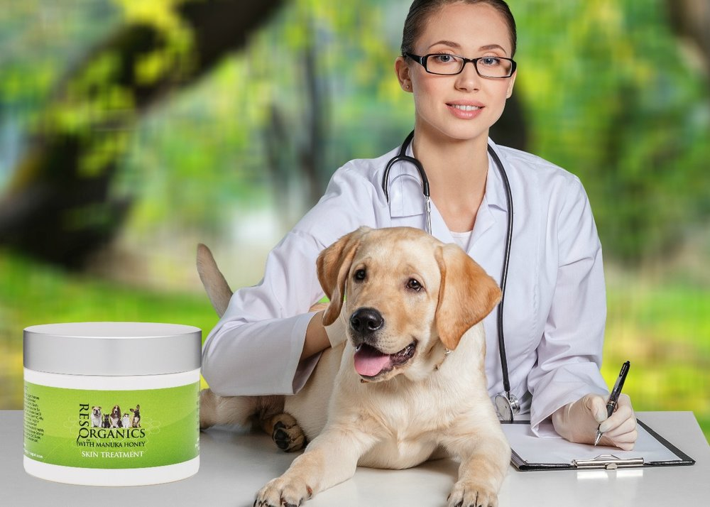 Skin Care for Pets