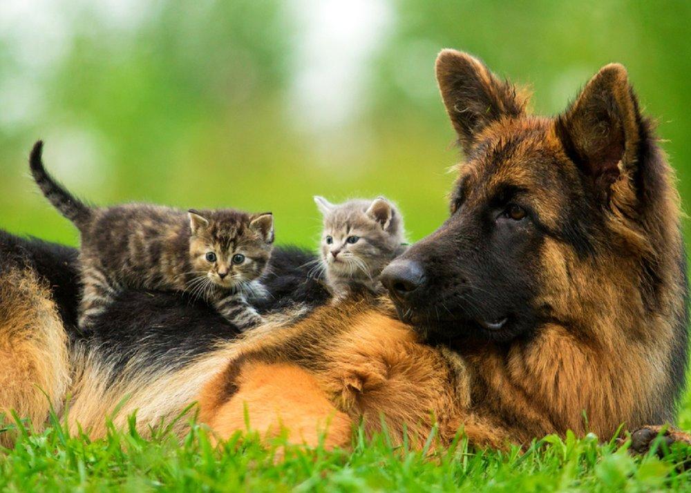 Dog-Cat-Horse-Skin-Care-Treatment-Testimonials.jpg