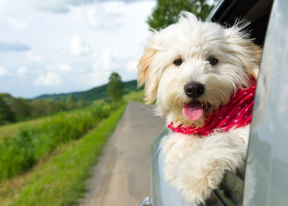 Hemp-Oil-Products-for-Pets.jpg