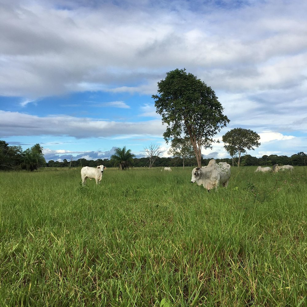 strong focus on natural open land ideal for grazing and routine pasture rotation to ensure the land is not over utilized