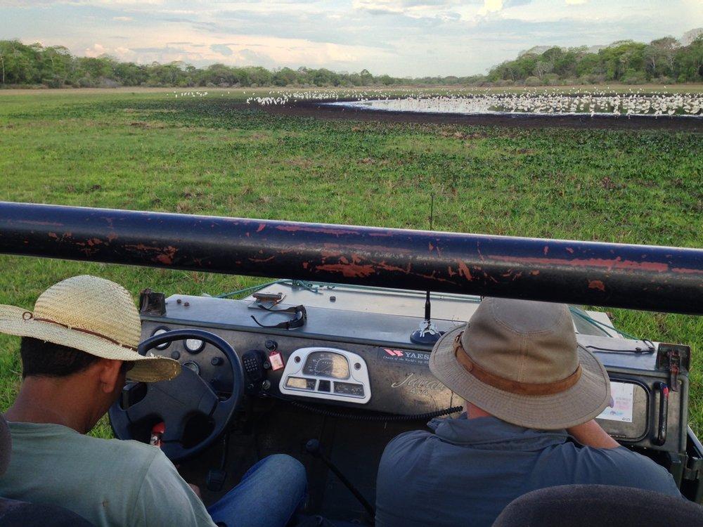 Pantanal Game Drive