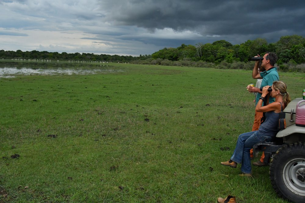 Pantanal Drive