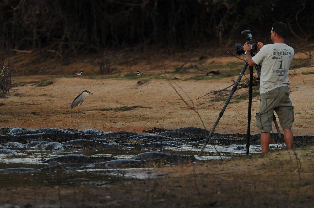 Pantanal Photography
