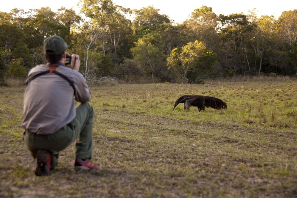 Following a Giant Anteater