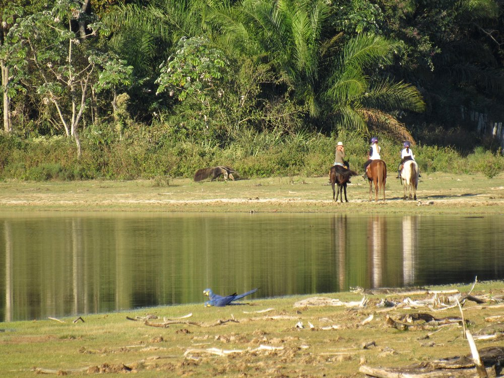Horseriding and Giant Anteater
