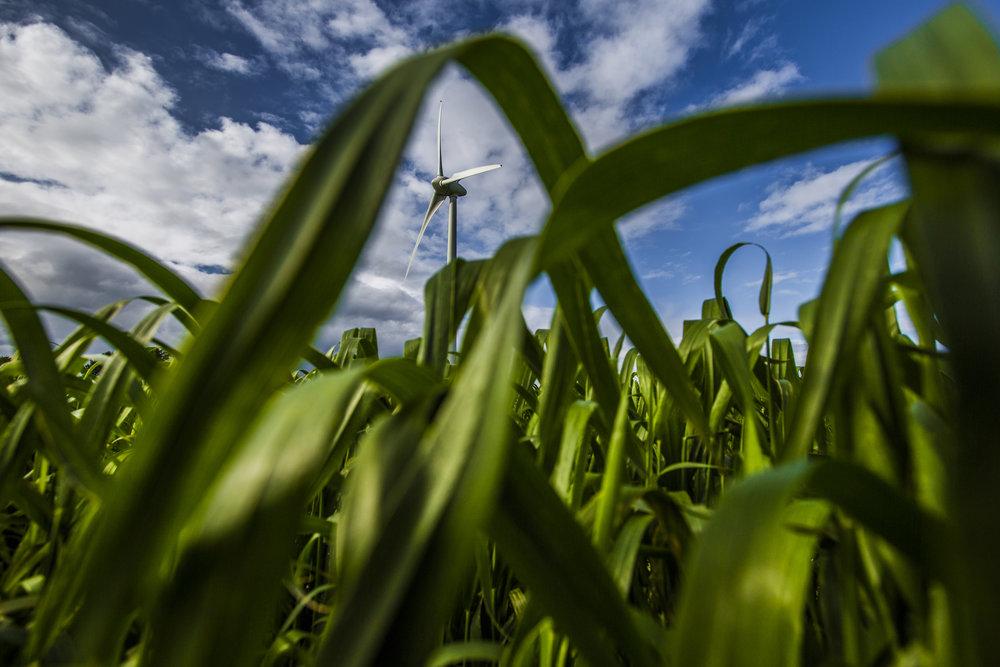 Renewable Energy-011x.jpg