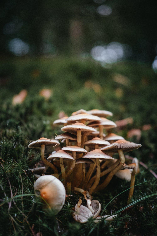 house of pleiades mushrooms