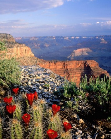 Etsy small picture banner maybe grand canyon and cactus.jpg