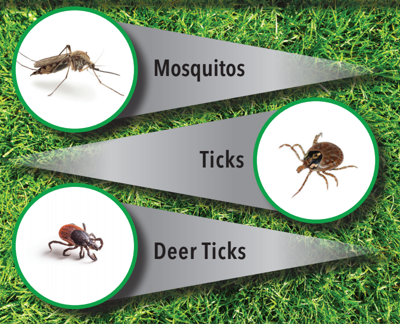 Mosquito and Tick Image.png