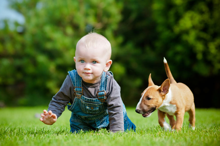 Kid on grass with Pit Bull Puppy.jpg