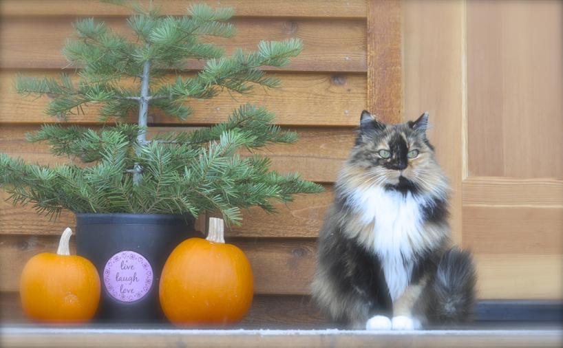 tree-kitten.jpg