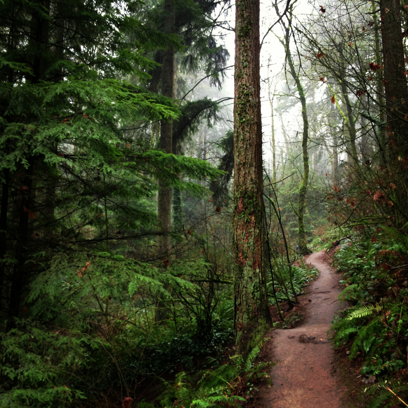 a-walk-in-the-woods1.jpg