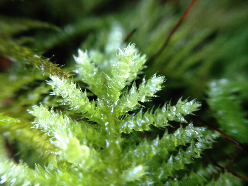 macro-leaf.jpg
