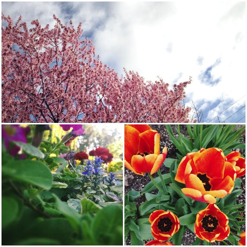fun-with-flowers.jpg