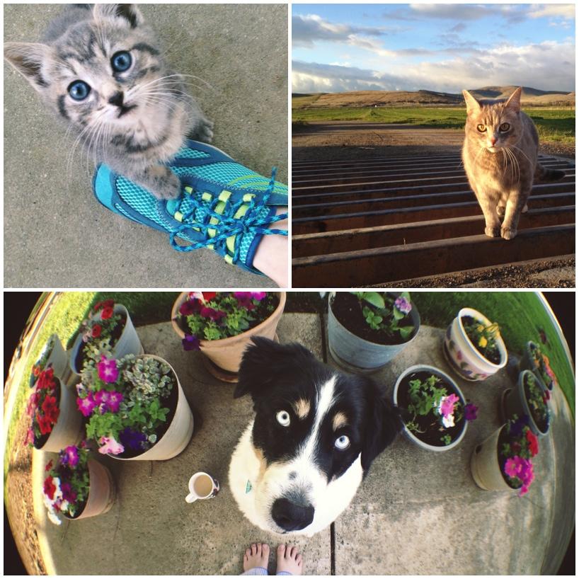 kitties-and-puppies.jpg