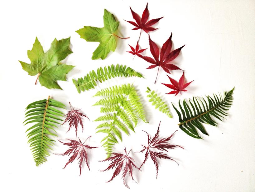 leaf-love.jpg