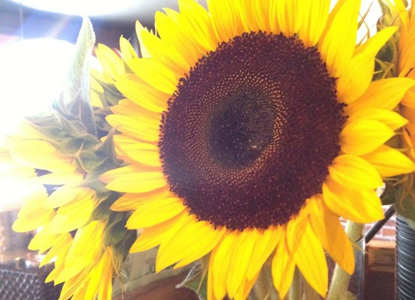 summer-flowers.jpg