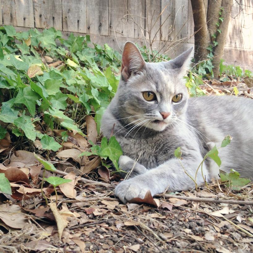 Elvis-kitten.jpg