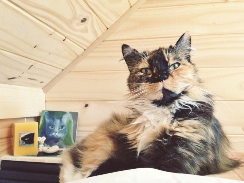 loft-kitten.jpg