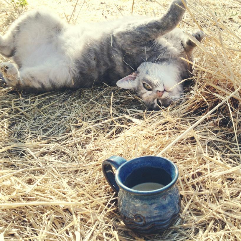yoga-kitten.jpg