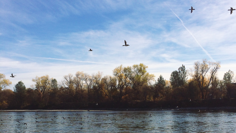 Sacramento River, taken with iPhone 5s