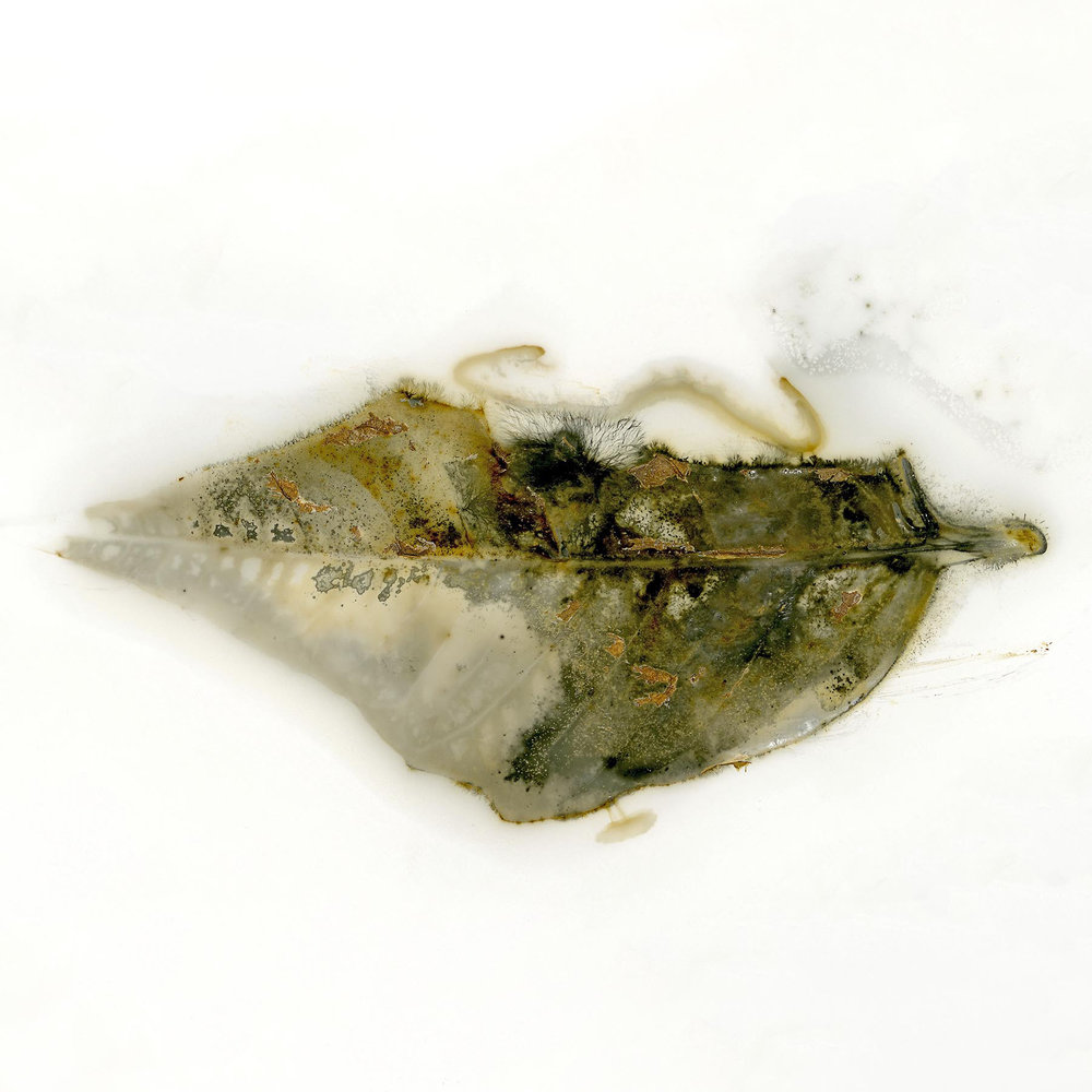 Edward Bateman, Leaf No 11 -Salt Lake City, Utah USA
