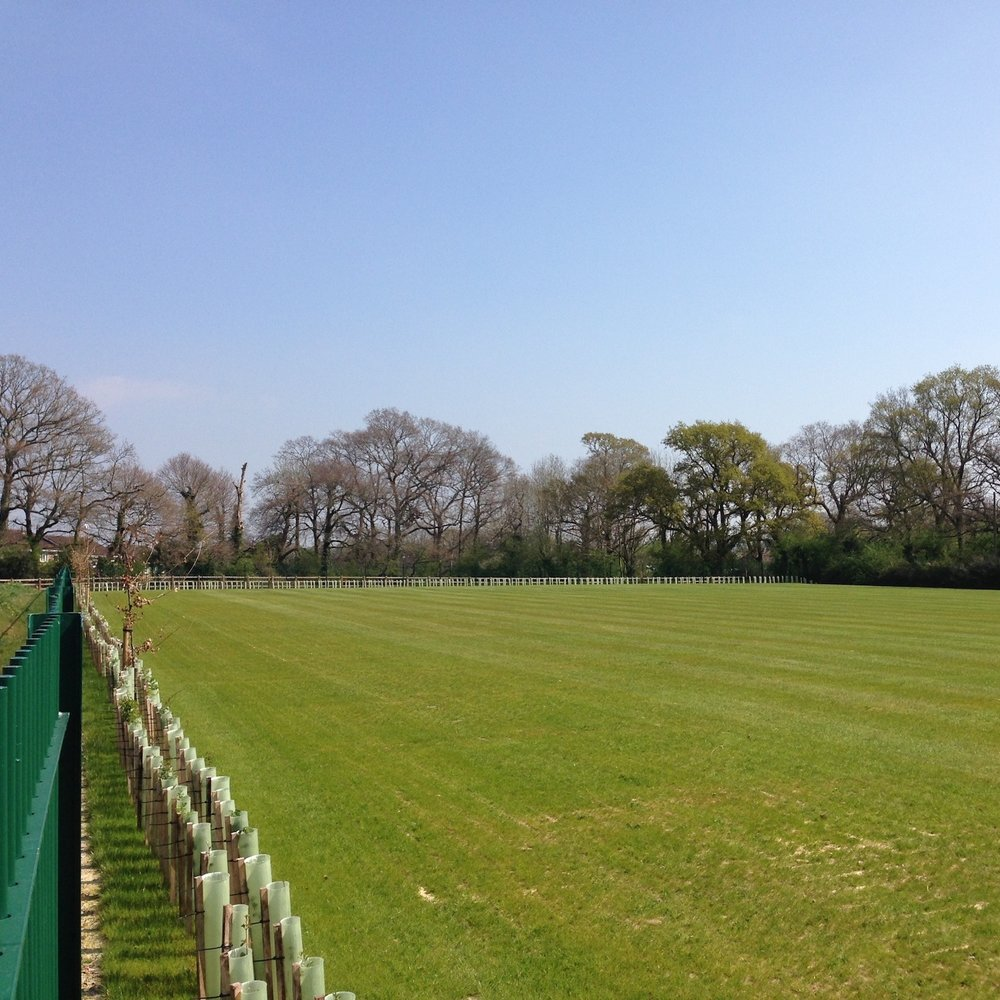 Woodcroft grass pitch spring.jpg