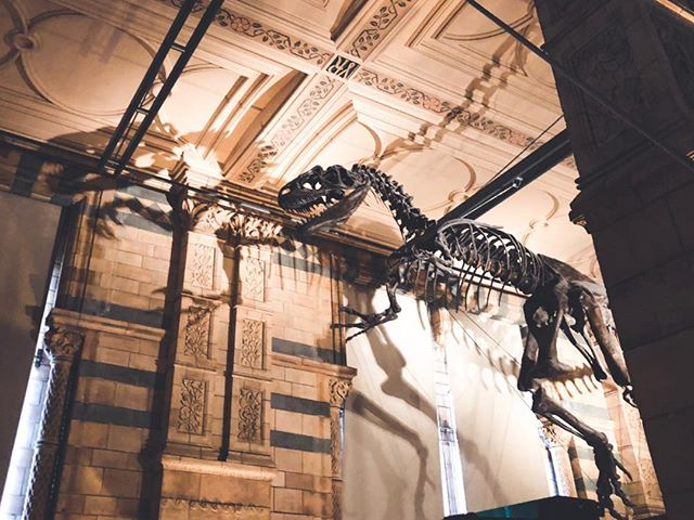 Exposition les dinosaures au Natural History Museum  #london #londres #dinosaure #exposition #science #nature #travel #trip #history #lovelondon