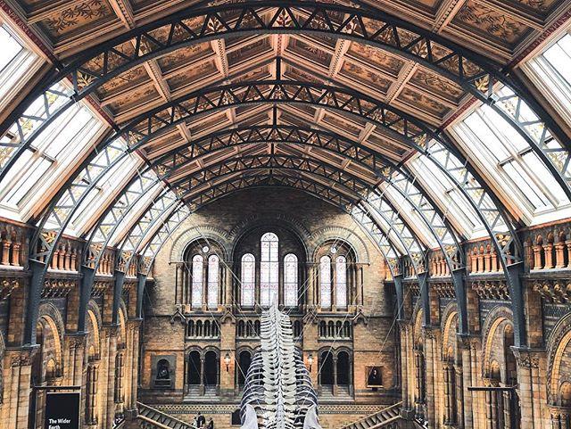 On continue la visite du National History Muséum de Londres. Le bâtiment est fantastique je pourrais y rester des heures.  #londres #london #travelphotography #naturalhistorymuseumlondon #naturalhistorymuseum #travelling #science #history #architecture