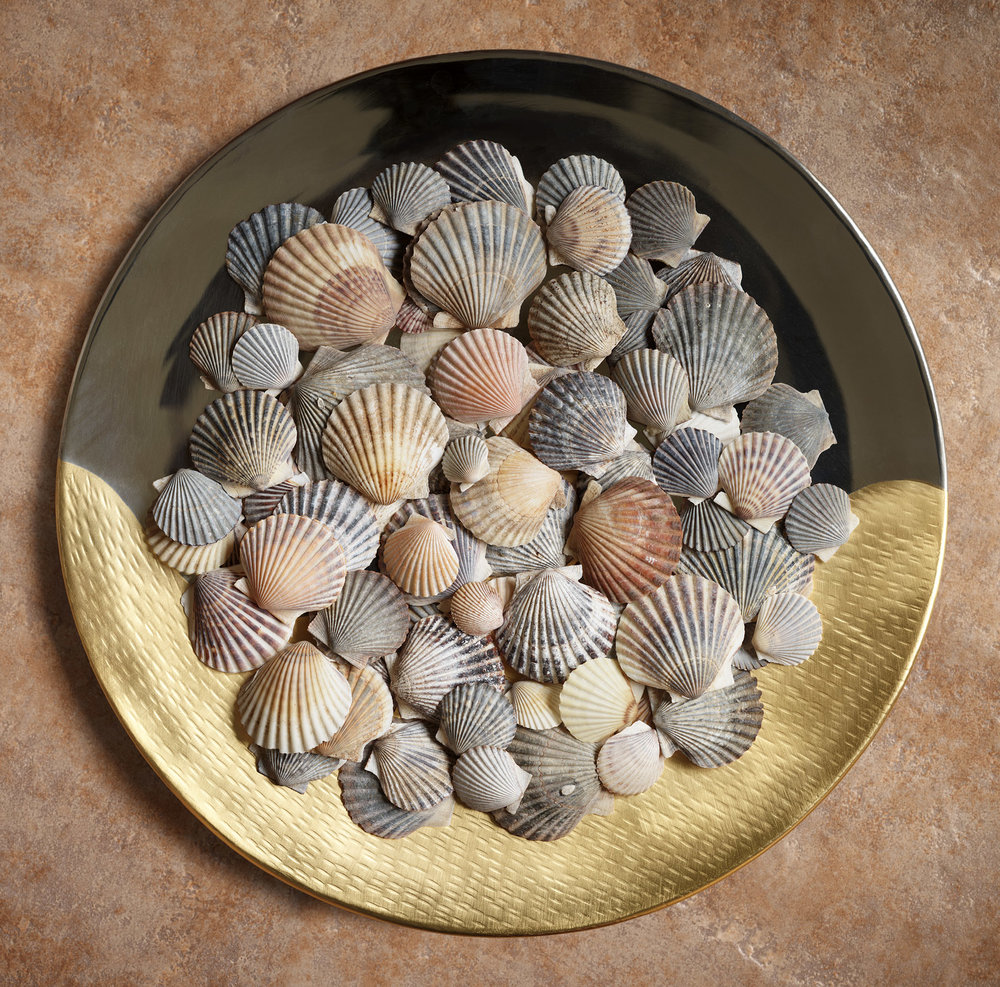 Scallop Shells On Tray