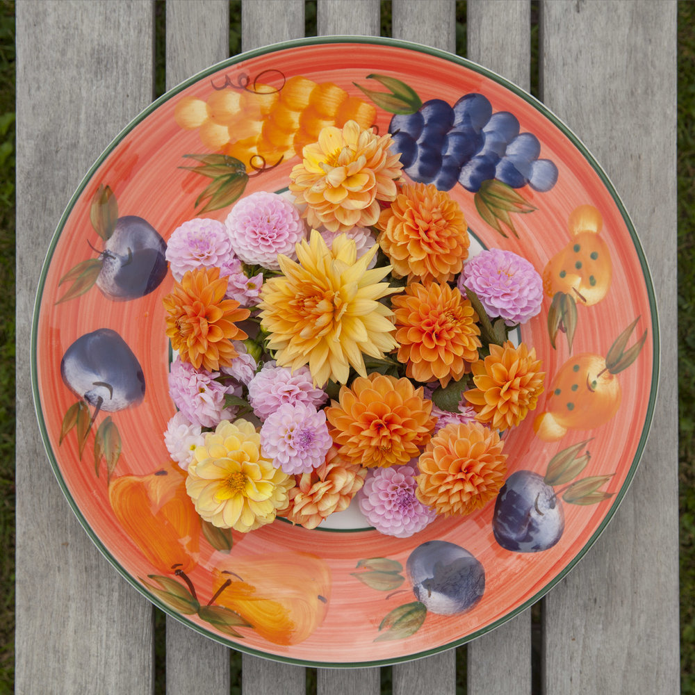 Dahlias In a Bowl On Teak Table