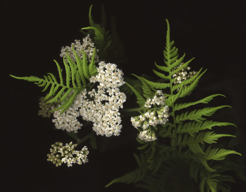 Yarrow and Fern