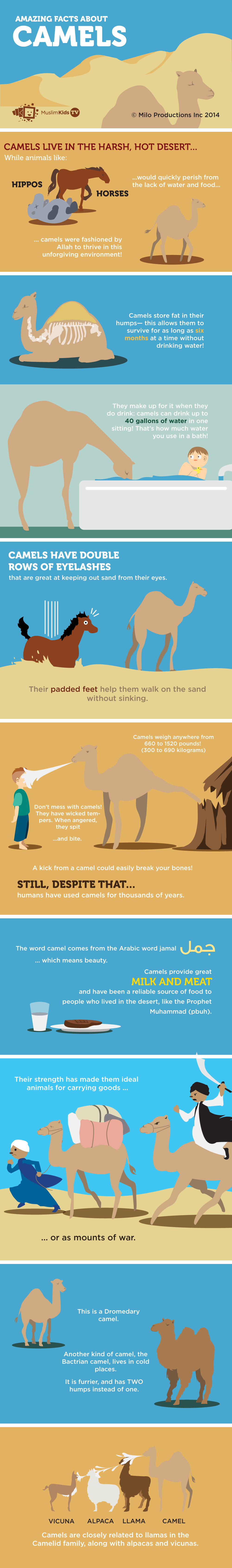 camel-info.png