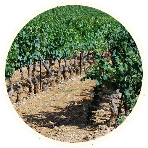 drinks-bernard-magrez-region-cotes-de-provence.png