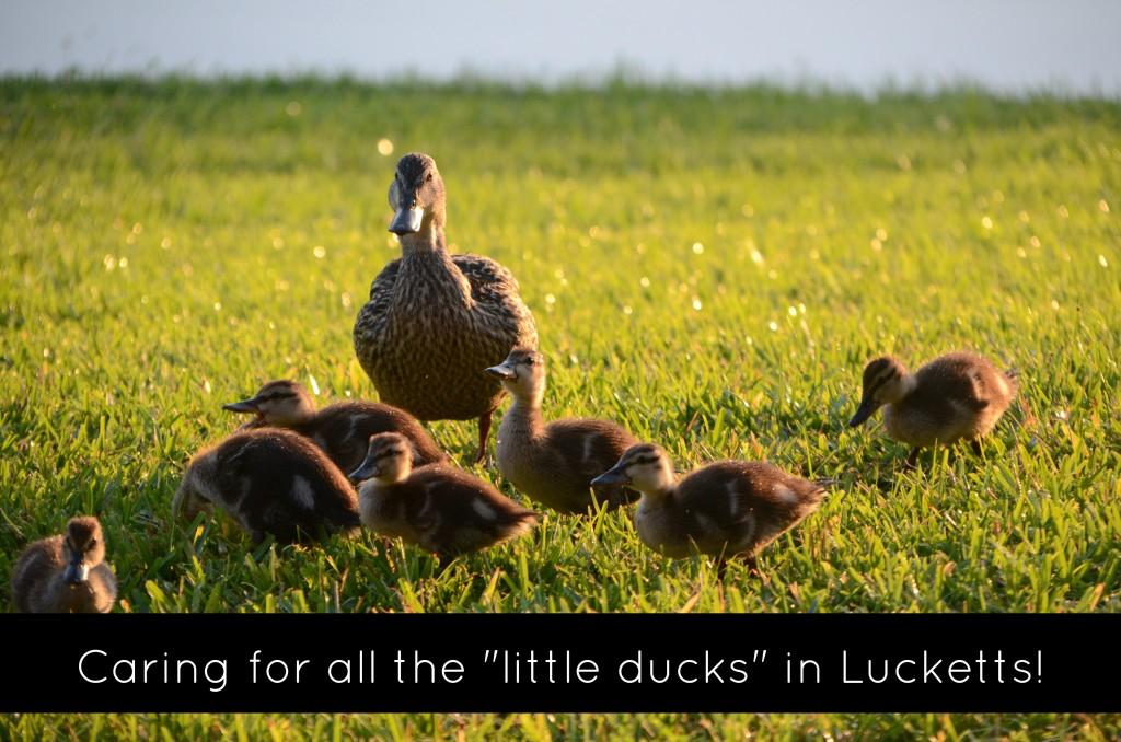 Lucketts Daycare Leesburg Preschool