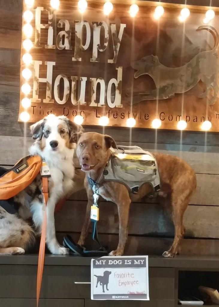 Happy Hound Lansdowne