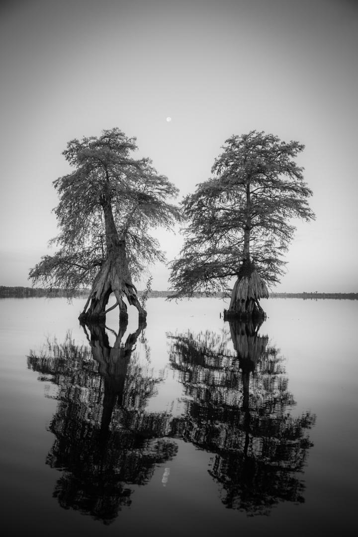 Dismal Swamp7.jpg