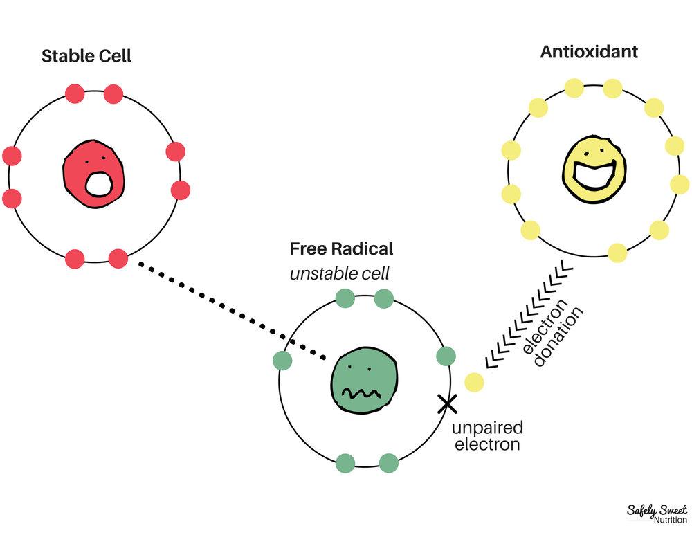 Antioxidant/Free Radical Infographic