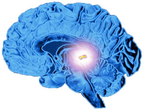 Decalcifies the Pineal Gland -
