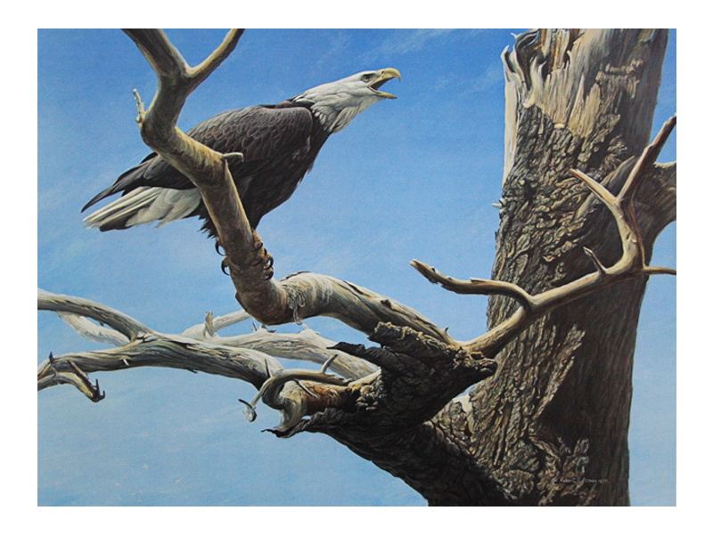 "Robert Bateman - Call of the Wild: Signed artist proof, 20"" x 27""Retail: $770"