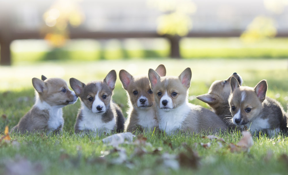 website puppies 1.jpg
