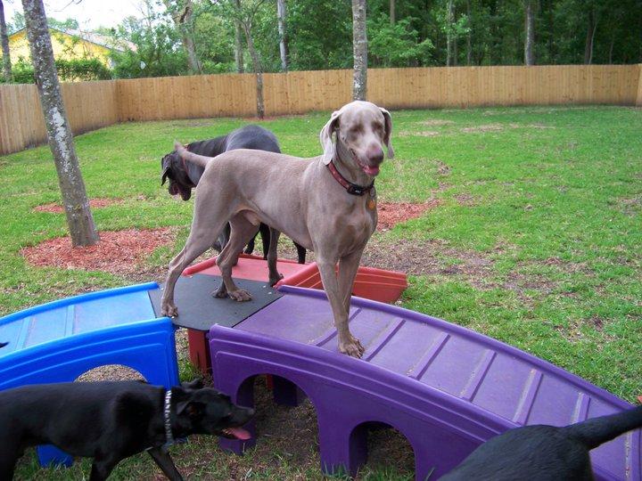 dog on bridge.jpg
